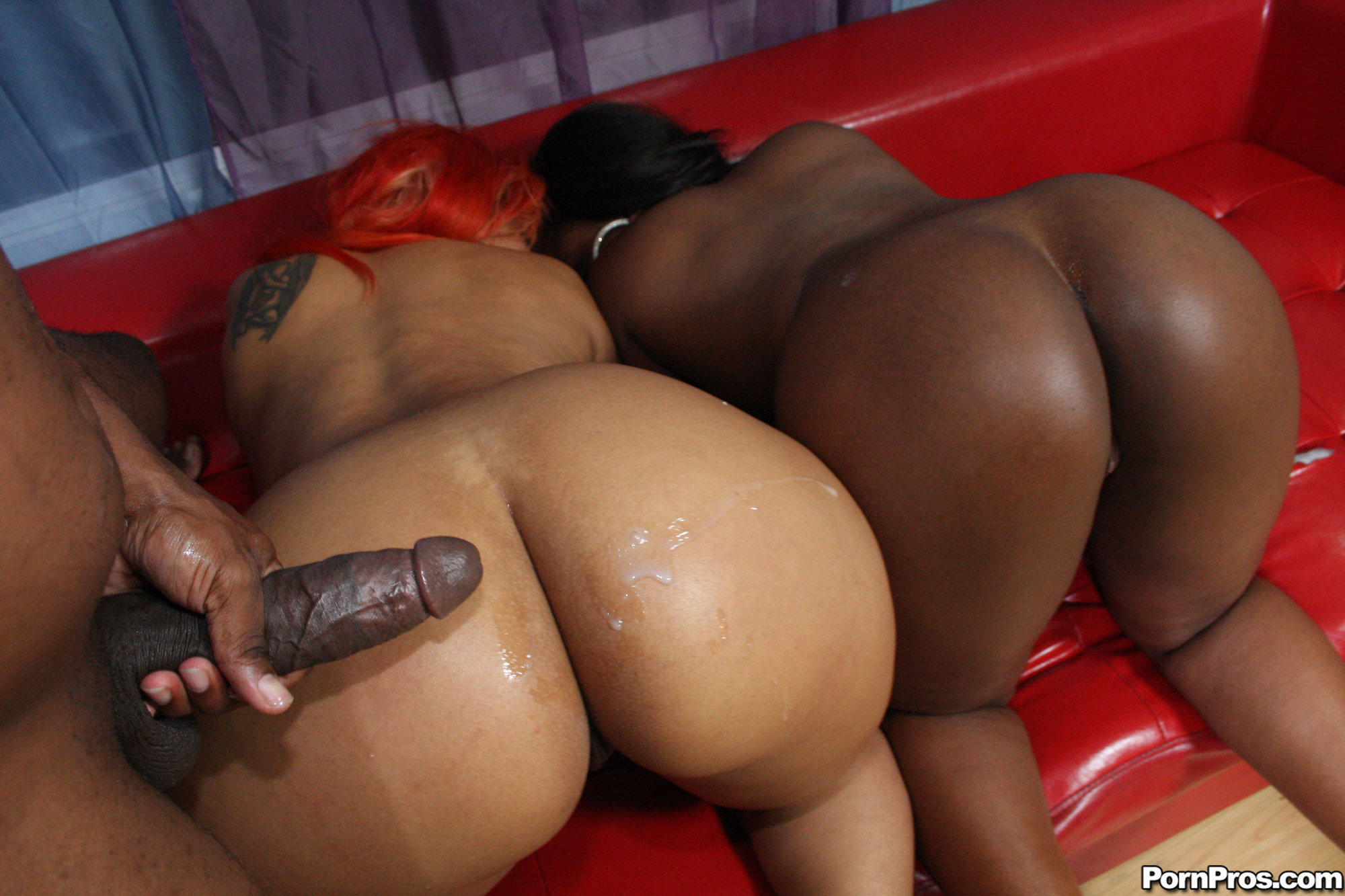 Big black booty bitches porn